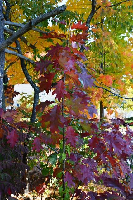 leaves-211-copy
