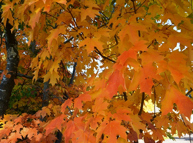 leaves-215-copy
